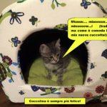 gatto notaio d'ambrosio