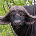 bufale del web